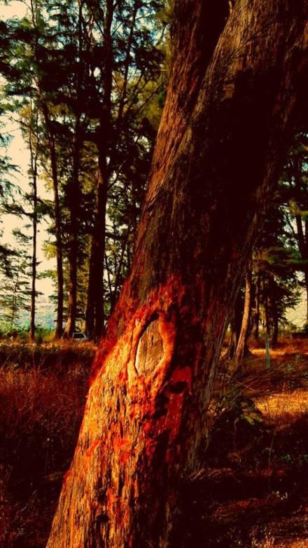 BLLEDING TREE